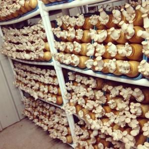 Mushroom Fields
